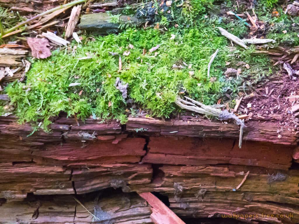 Moss On Dry Wood