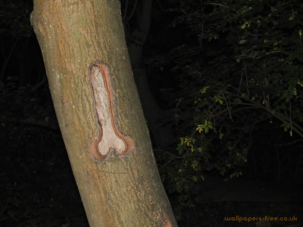 Private Parts Carved Into Tree Trunk
