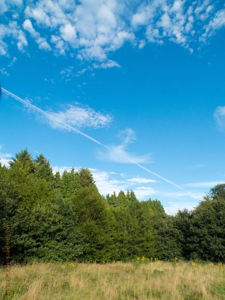 Sky Trees Grass