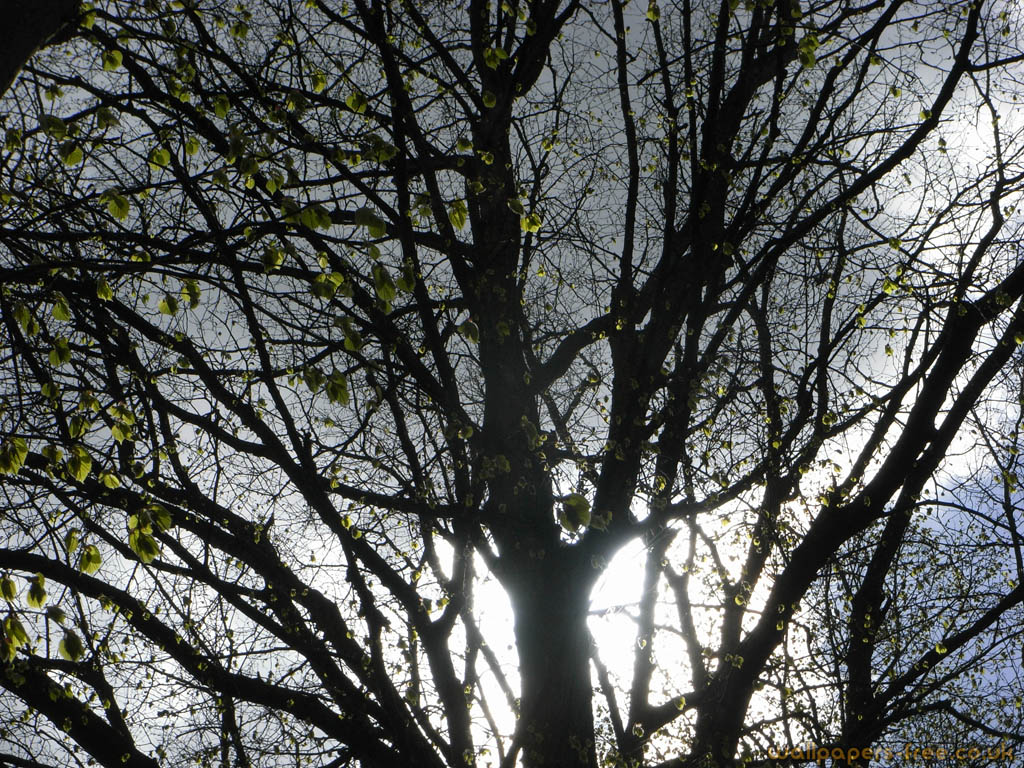 Sunlight Through Branches On A Stormy Day