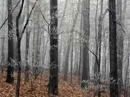 Forest Frost Edwin Warner Park Nashville Tennessee