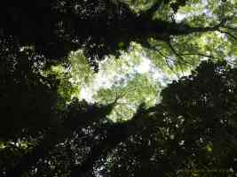 light coming through tree canopy