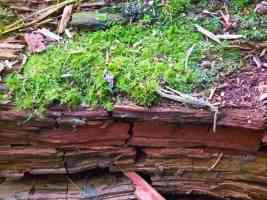 moss on dry wood
