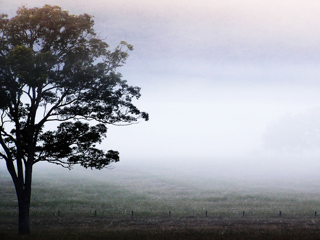 Tree In Misty Field