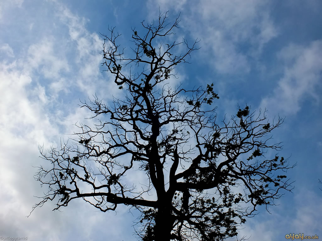 Winter Tree Branches Against Blue Sky