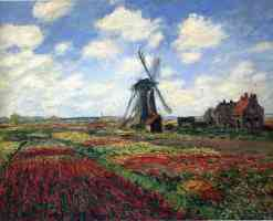 feild of tulips in holland with windmill