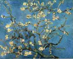 branches with almond blossom