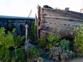 boatyard fern garden in faversham