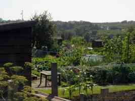 loose village allotment
