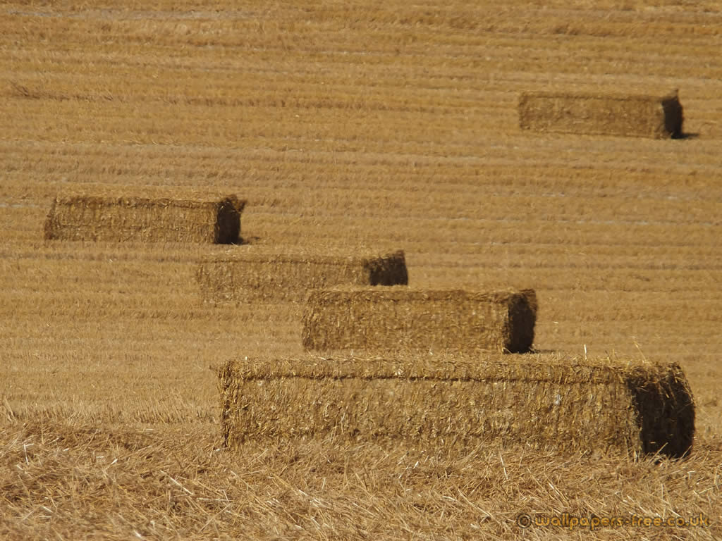 Hay Bales In Low Perspective