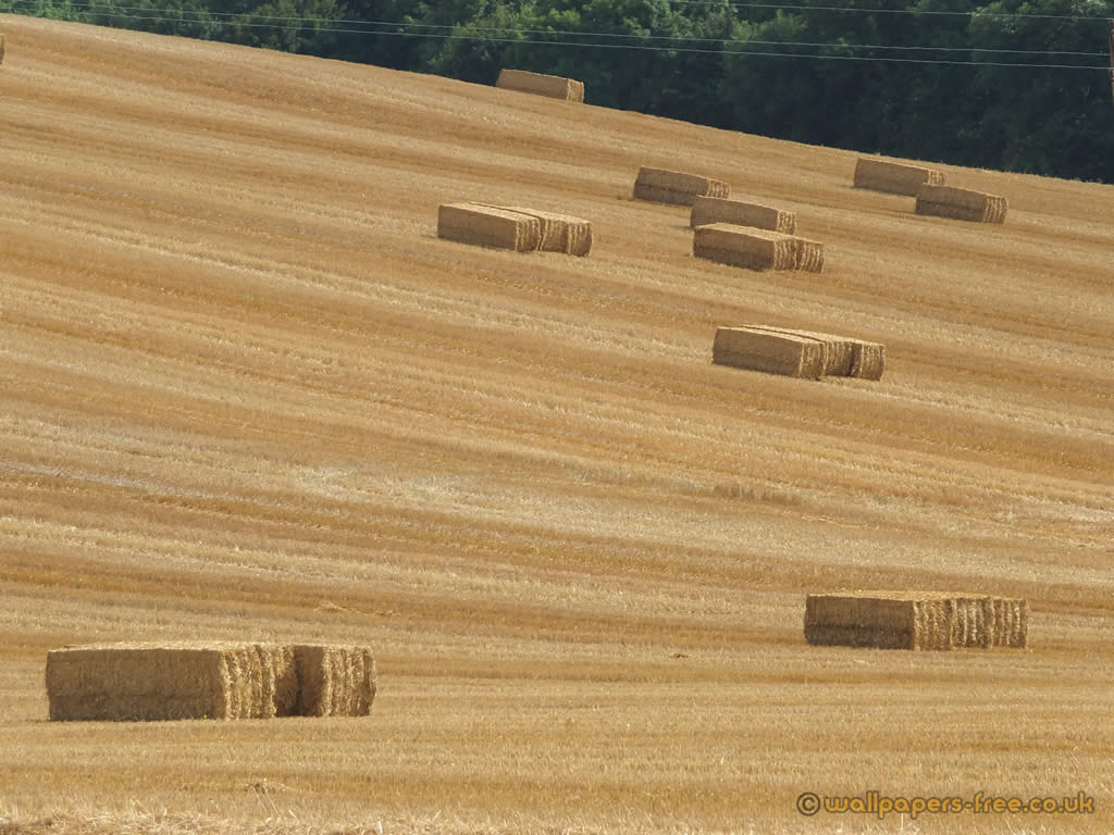 Hay Bales On Rolling Hill