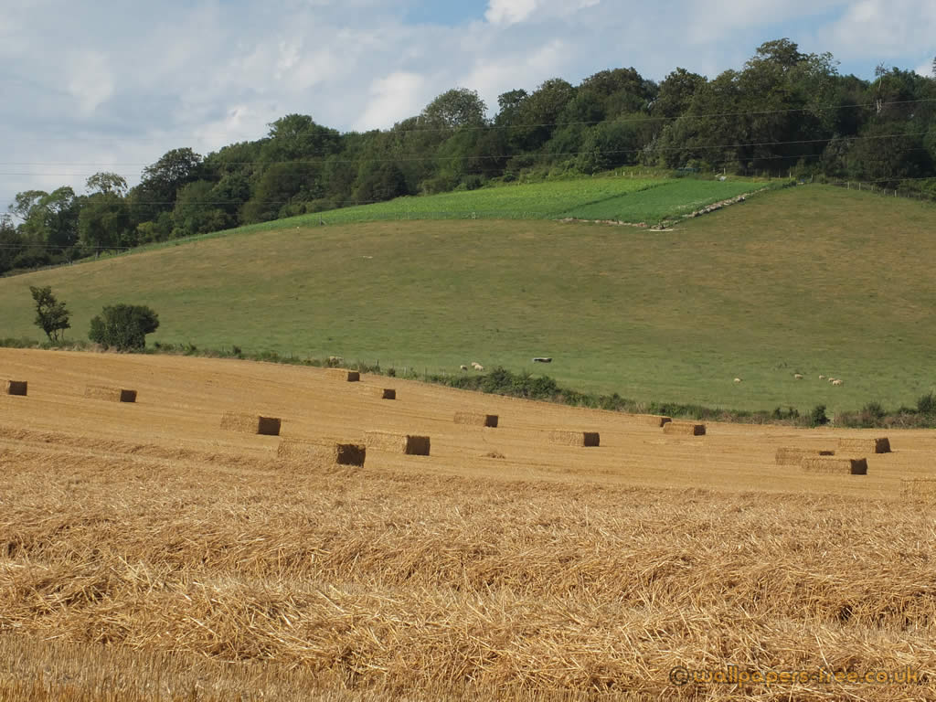 Hay On Rolling Hills