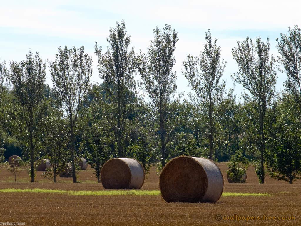 Round Hay Bails Near Kingswood Kent