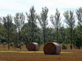 round hay bails near kingswood kent