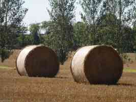 two round hay bails