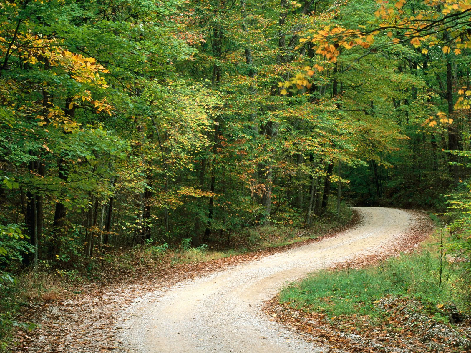 Country Road In Autumn Nashville Indiana