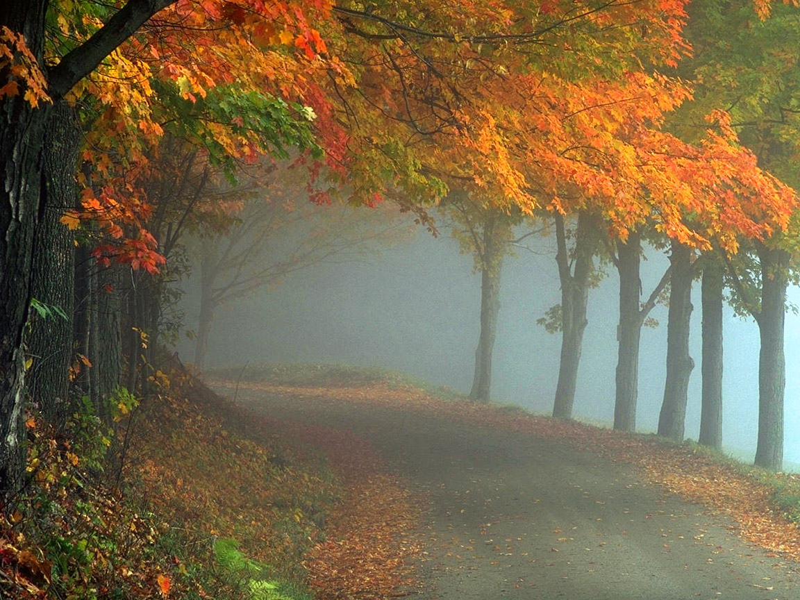 misty fog landscape wallpapers - photo #30