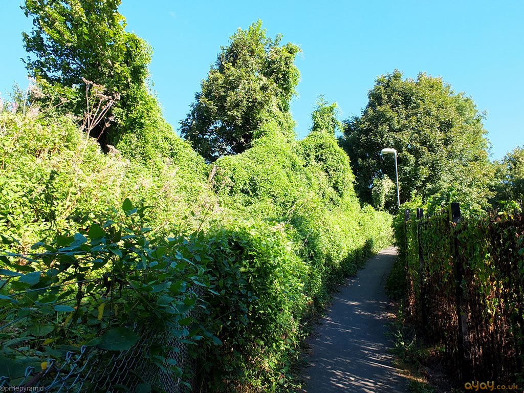 Green Overgrown Path