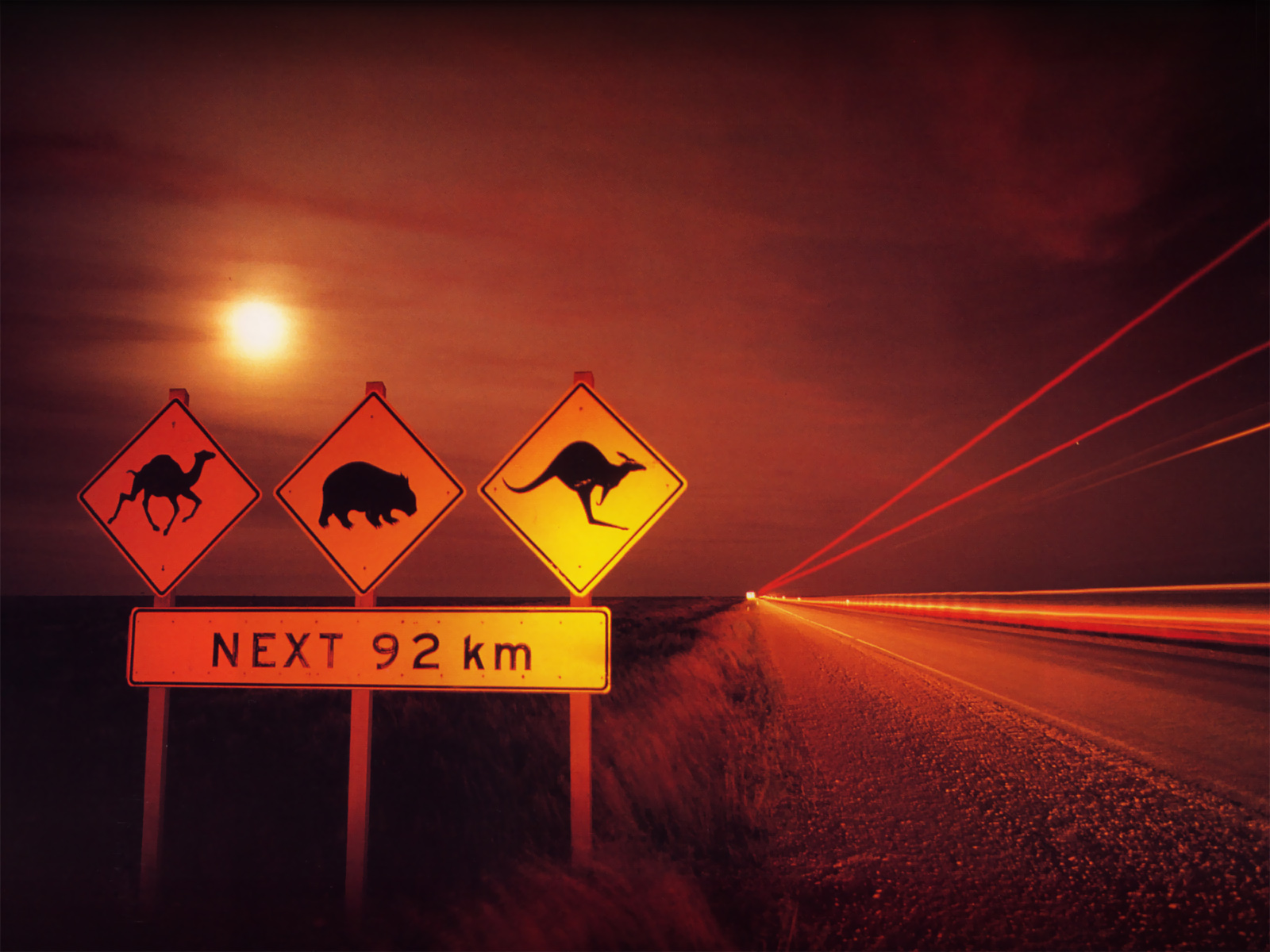 Treez Australia Camel Wombat Kangaroo Eyre Hway Nullar