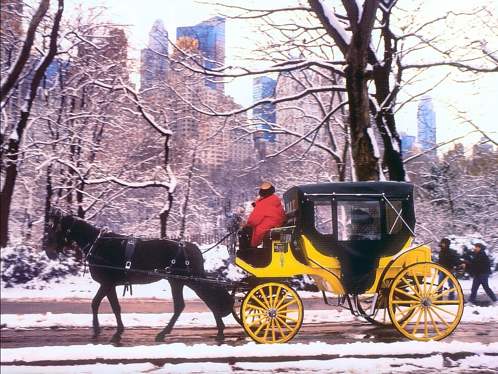 Carriage Ride In Central Park