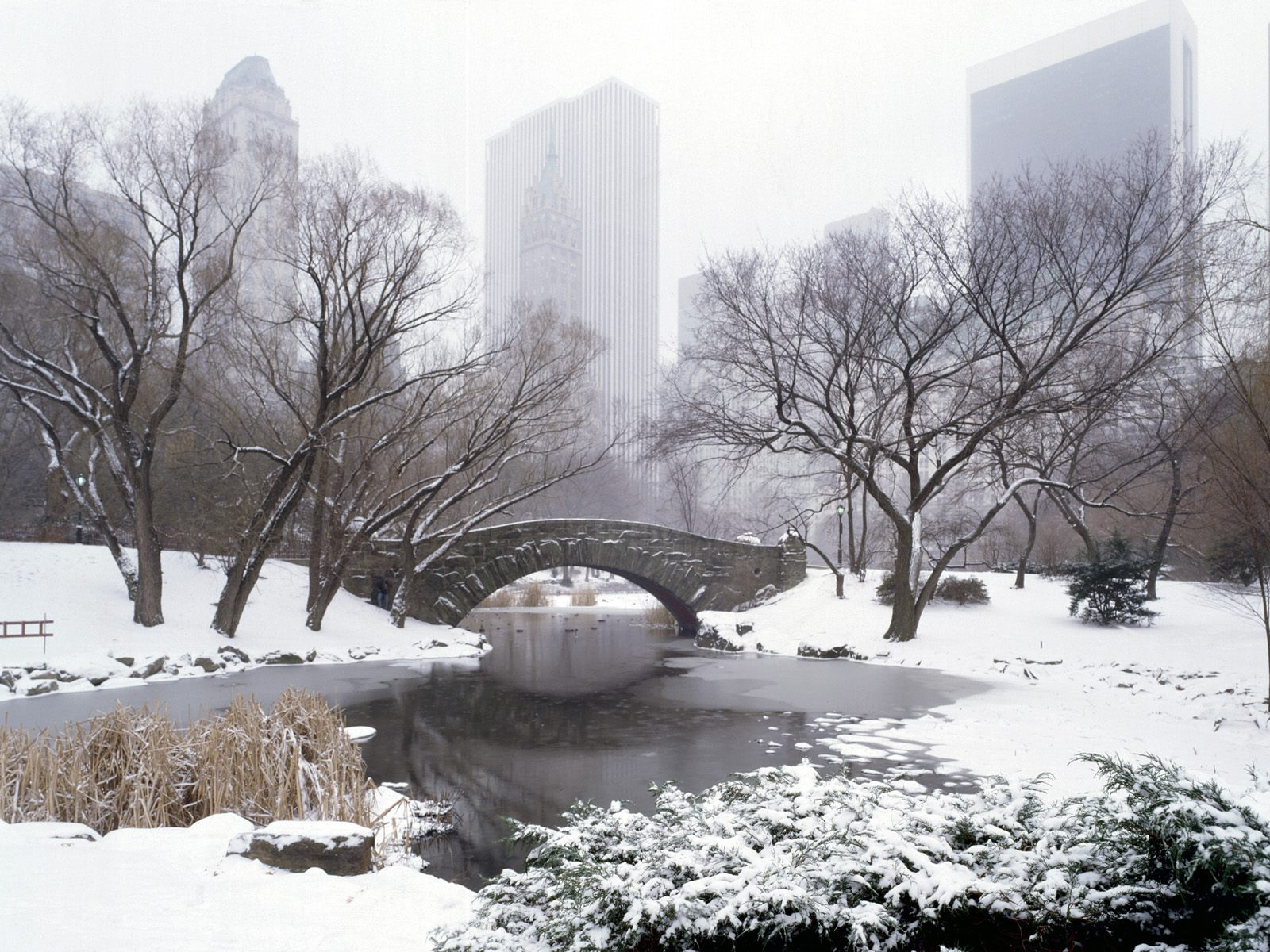 Central Park In Winter New York City New York
