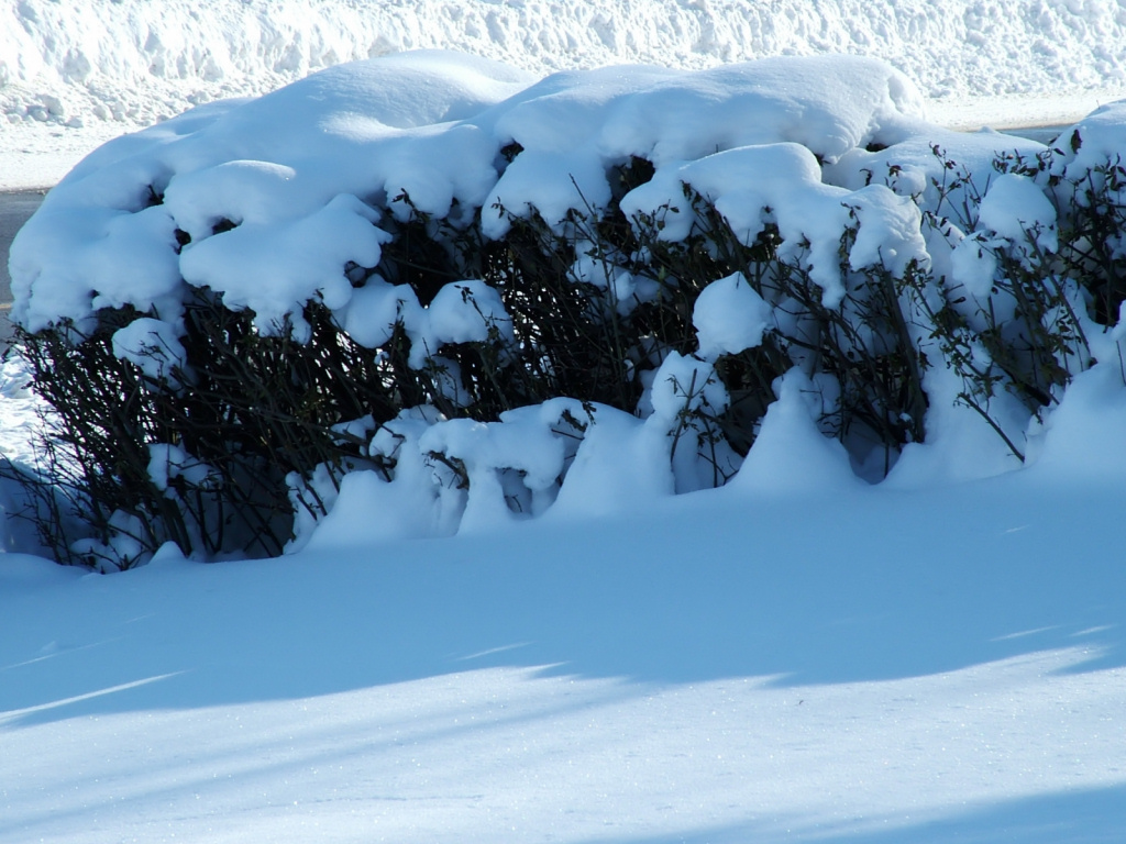 Owen Sound Winter Hedge