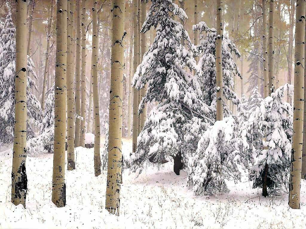 Arizona Winter Woods