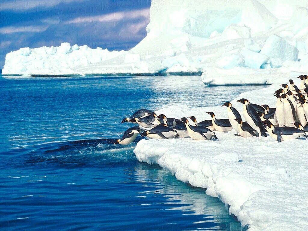 Penguins Making A Splash