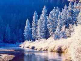 Plumas National Forest California
