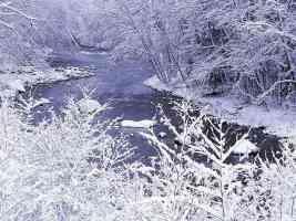 River Banks on the Elwha River