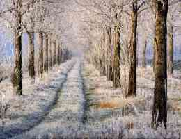 frosty tree lined country path