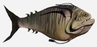 doo scalefish