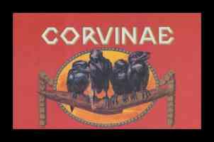 corvinae