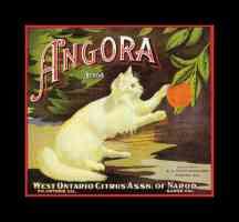 angora oranges