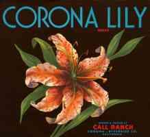 californian corona lily brand oranges