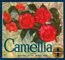 camellia brand oranges