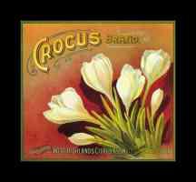 crocus brand oranges
