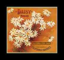 daisy brand oranges