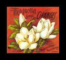 magnolia brand oranges