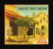 parent tree brand oranges