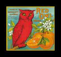 red owl oranges