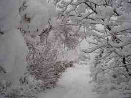 thick snow on woodland 2