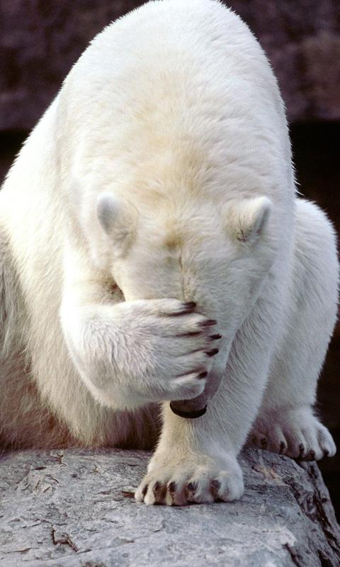 Bear Polar Bear