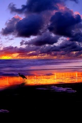 Bird Bird Beach Clound And Sunset