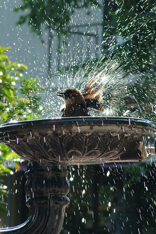 Bird Bird Shower