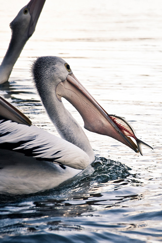 Bird Feeding Time