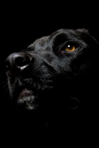 Dog Noiresque Dog