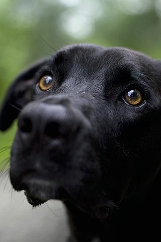 Dog Same Dog