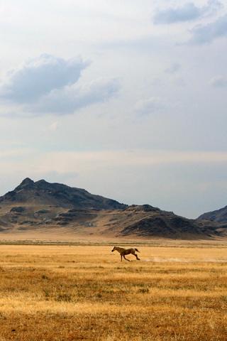 Horse Wild Horse