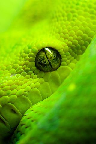 Reptile Reptile Eye